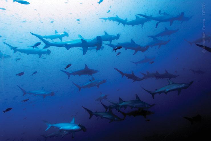 ECUADOR: Ecuador presenta protesta a China por pesca ilegal de especies protegidas